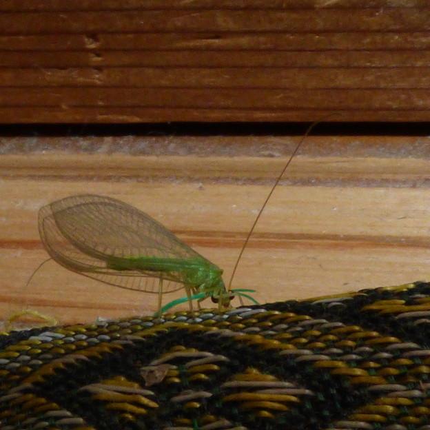 緑の虫の物語?(4話)