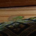 Photos: 緑の虫の物語?(5話)