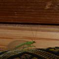 写真: 緑の虫の物語?(おまけ)