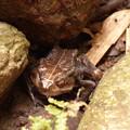 Photos: カエルの置物!?