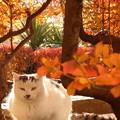 写真: 初冬の公園猫?