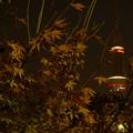 夜の楓とスカイツリー(1)