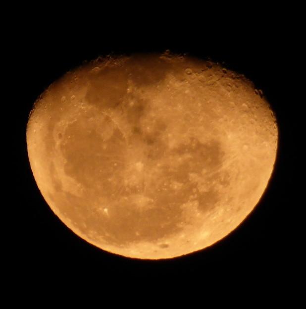 Photos: 夜空に浮かぶ柑橘類!?