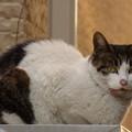 Photos: 屋根の上の野良猫?