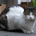 Photos: 同じポジの同じ猫?