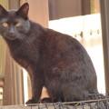 塀の上の黒猫