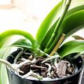 Photos: Plant Air