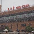 写真: 季節外れの大雪@仙台
