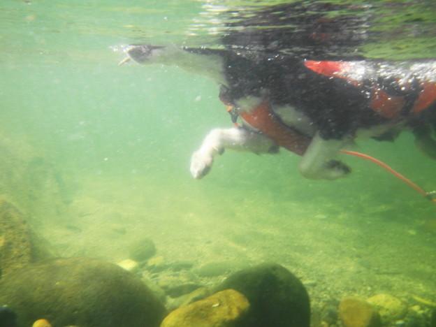写真: Rex水中