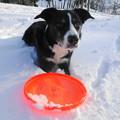 写真: 413・1・19雪遊び