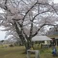 写真: 2013Rex花見.-2