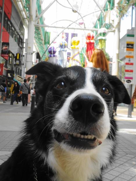 写真: 仙台青葉祭り3