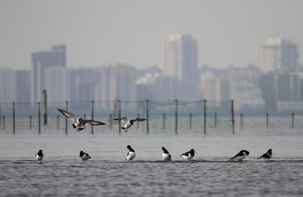都会と野鳥