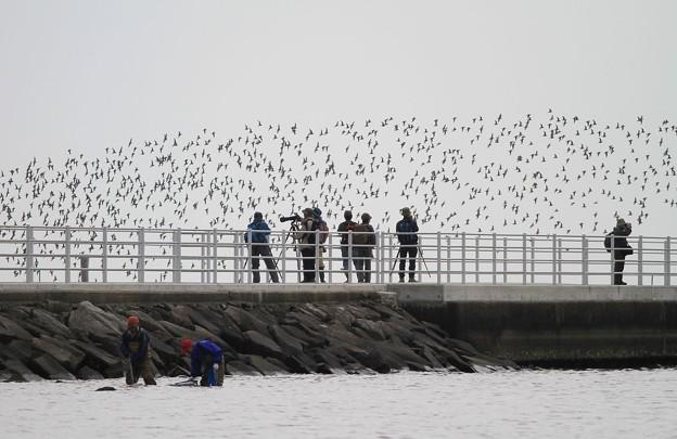 カメラマンと野鳥