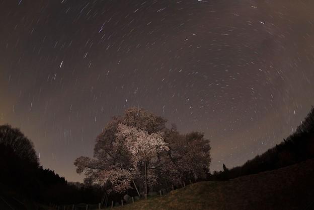 Photos: 夜桜?