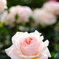 Photos: 庭園の君