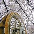 Photos: 春の東京(1)