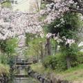 Photos: 春の東京(2)