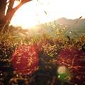 秋色の射光