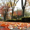 落葉の街並み
