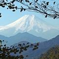 晩秋の富士(1)