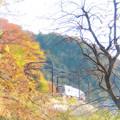 高尾山の晩秋(2)