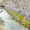 春の小川(2)2014
