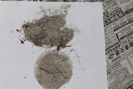 巣の中のゴミ
