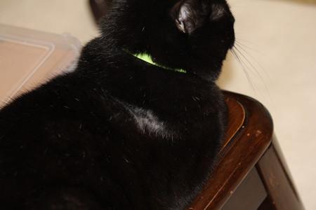 黒猫に白髪