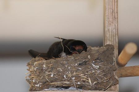 巣のすわり心地は