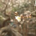 Photos: ひとり咲