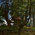 写真: 鳥海山大物忌神社・蕨岡口之宮 木大葉神社