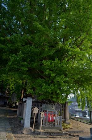 熊野大社・道祖神社と大銀杏