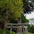 写真: 配志和神社・白鳥神社