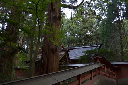 赤城神社[三夜沢]・本殿とタワラ杉