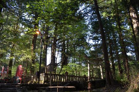 滝尾神社・三本杉