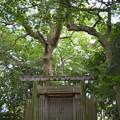写真: 河原神社・毛理神社2