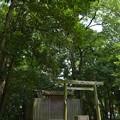 写真: 河原淵神社8
