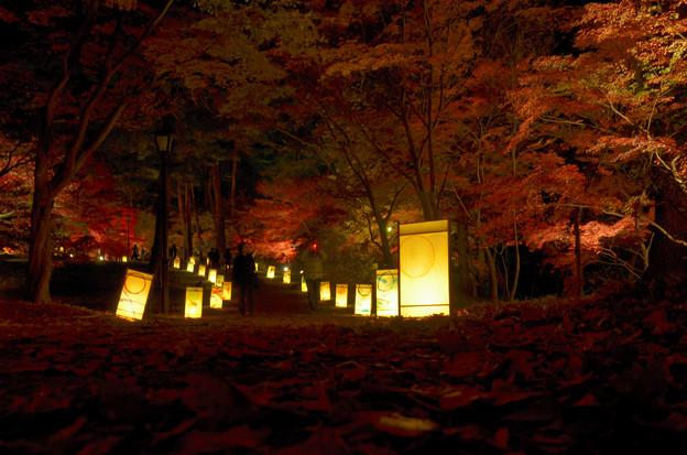 森林公園ライトアップ1