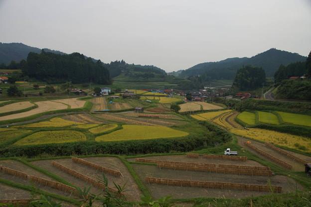周南市 中須の棚田 -収穫-
