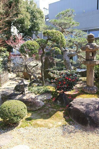 IMG_1091大阪天満宮・大盆梅展