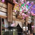 IMG_4702高照寺・桃色木蓮と本堂