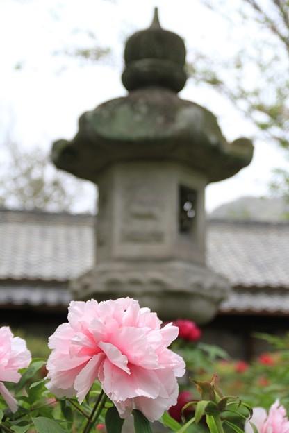 IMG_5918中庭・牡丹と灯篭