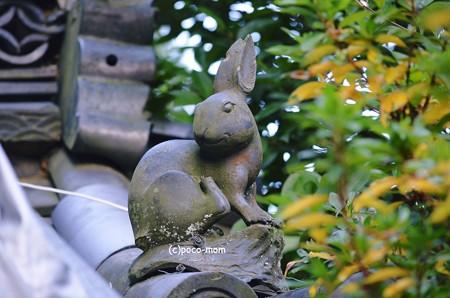 三尾神社 見返り兎2013年01月13日_DSC_0115