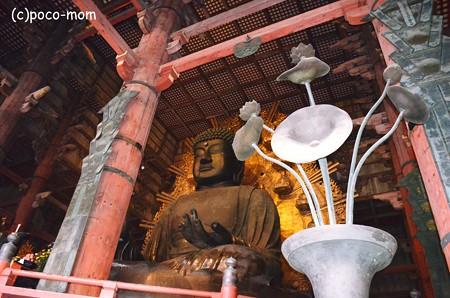 東大寺とと花2013年01月14日_DSC_0412