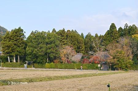 嵯峨嵐山落柿舎2013年11月24日_DSC_0010