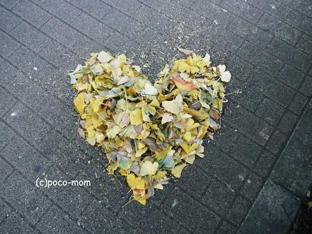 落ち葉掃除2013年11月29日_PB290848