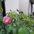 写真: 6misato24081401 (563x422)