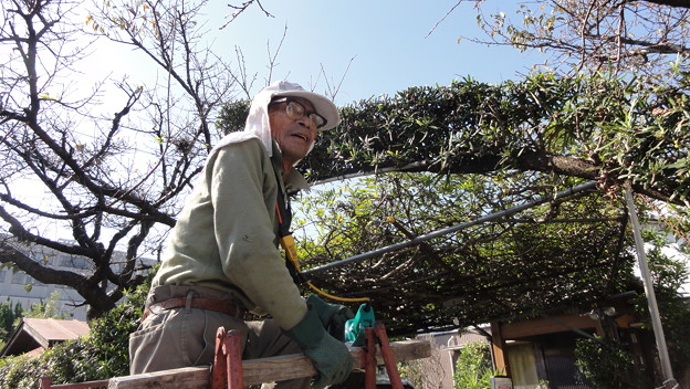 84歳の庭師?2