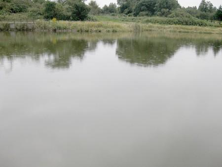 雨の大正地池